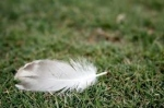 Feather from Forrest Gump