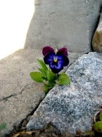 flower-growing-in-concrete-crack