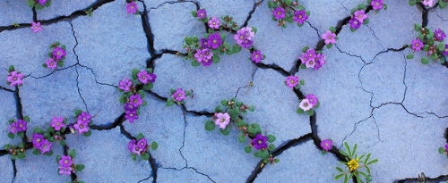 flower-tree-growing-concrete-pavement